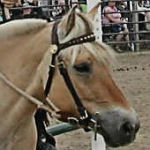 Six buckle headstall